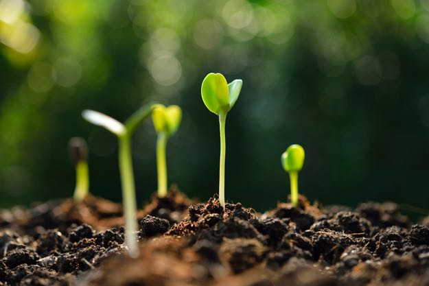 Growing Super Sprouts, Types of Sprouts and Their Benefits